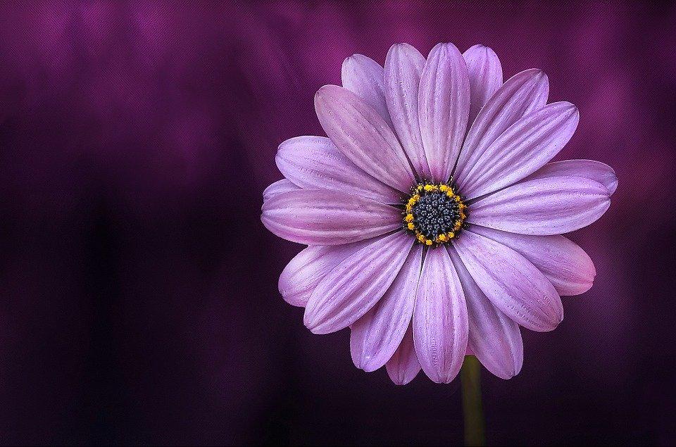 flower-729512_960_720